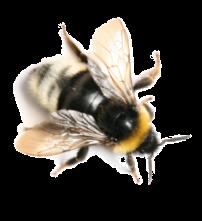 Bumblebee small_01